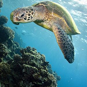 Say Aloha to These Top Beaches on Kauai!